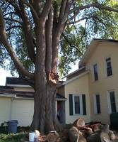 Tree Care Request